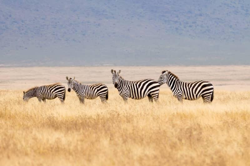 L'Afrique en jet privé, formule TOUT COMPRIS